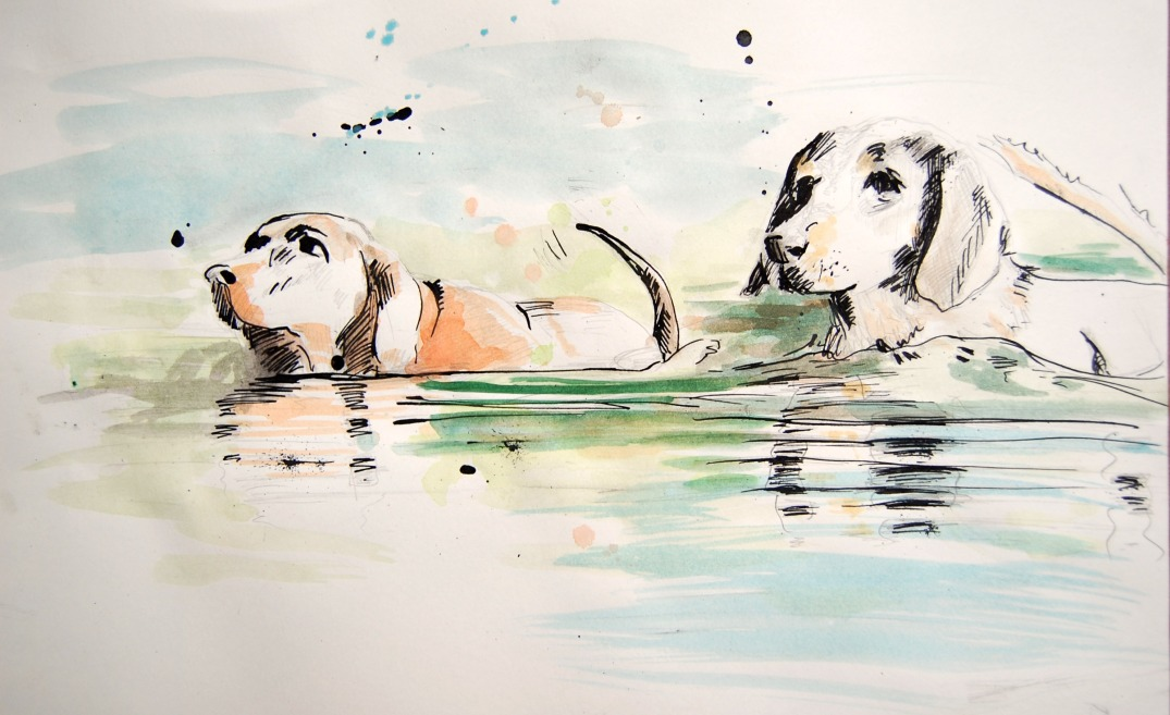 Ink and watercolor drawing of two hounds swimming